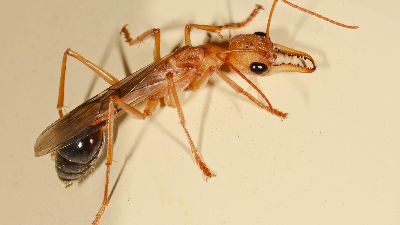 Фото бесплатно лапы, глаза, рот, крылья, хвост, усы, насекомые, насекомые