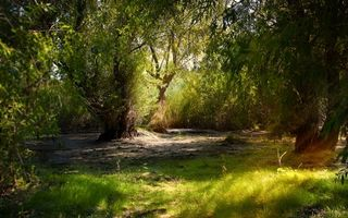 Бесплатные фото лес, деревья, ветки, листья, зеленые, трава, природа