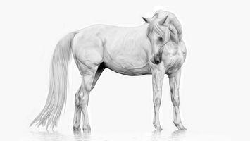 Бесплатные фото лошадь,белая,хвост,мышцы,вены,отражение,вода