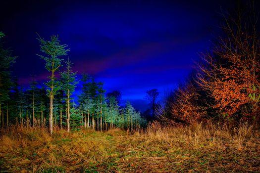 Фото бесплатно ночь, поляна, деревья