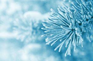 Бесплатные фото новогодний фон,ветка,сосна,иней,иголки,макро
