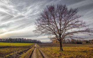 Бесплатные фото осень,деревья,поля,пахота,дорога,небо,пейзажи