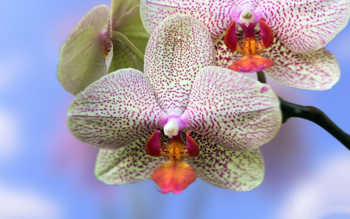 Фото бесплатно цветочки, лепестки, в крапинку - на рабочий стол