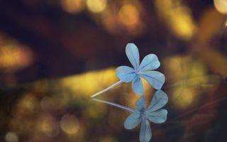 Бесплатные фото цветок,стебель,лепестки,блики,отражение,фокусировка,разное