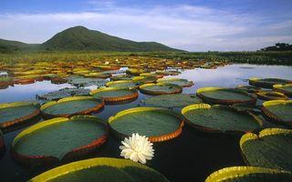Фото бесплатно вода, река, озеро, лилии, цветы, небо, горы, природа