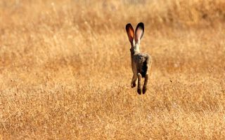Фото бесплатно заяц, поле, луг