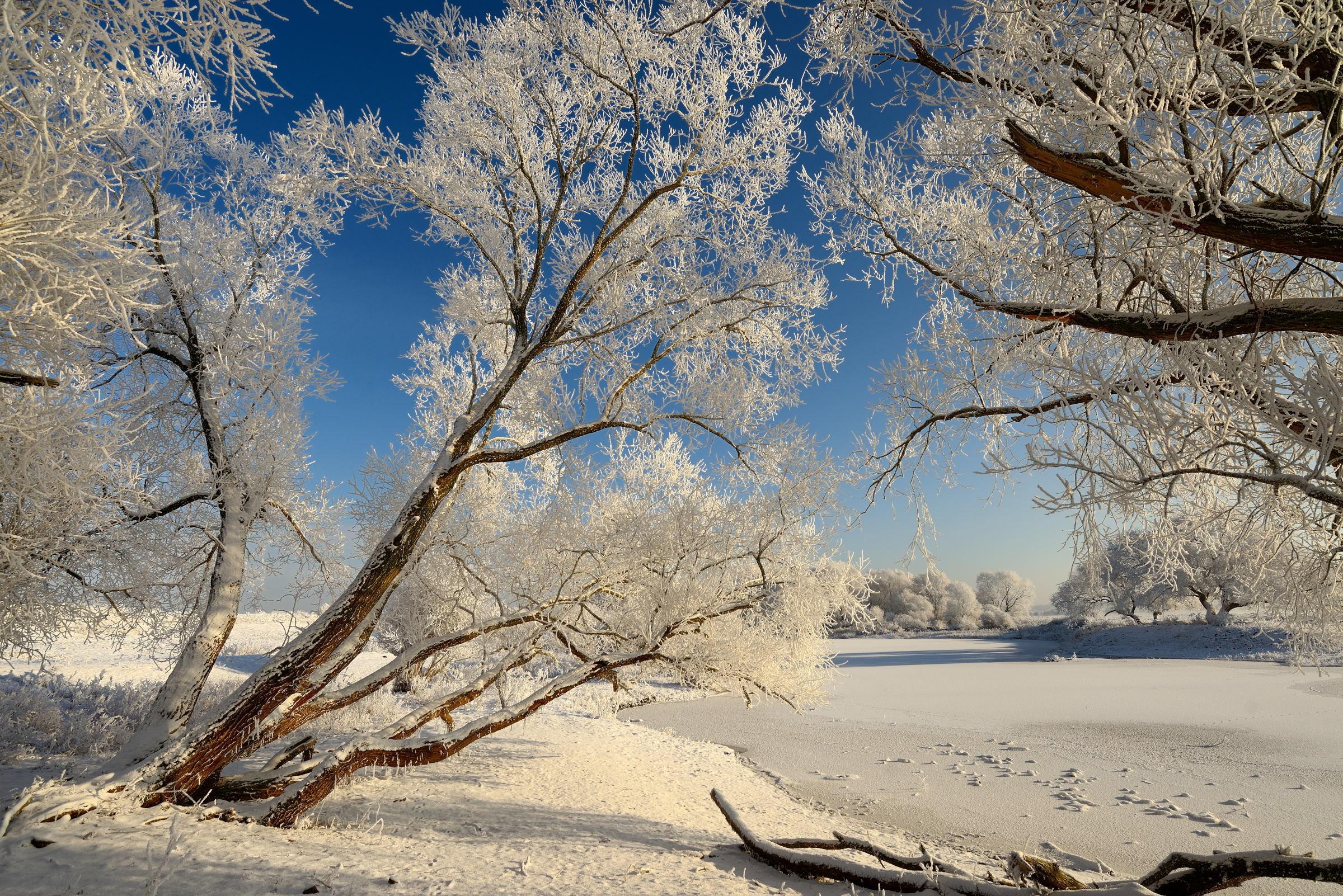 обои зима, снег, деревья, замёрзшее озеро картинки фото
