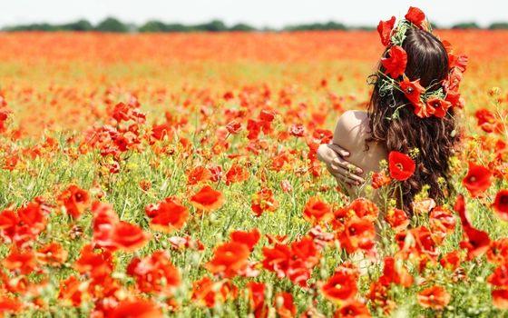 Фото бесплатно девушка, поле, маки