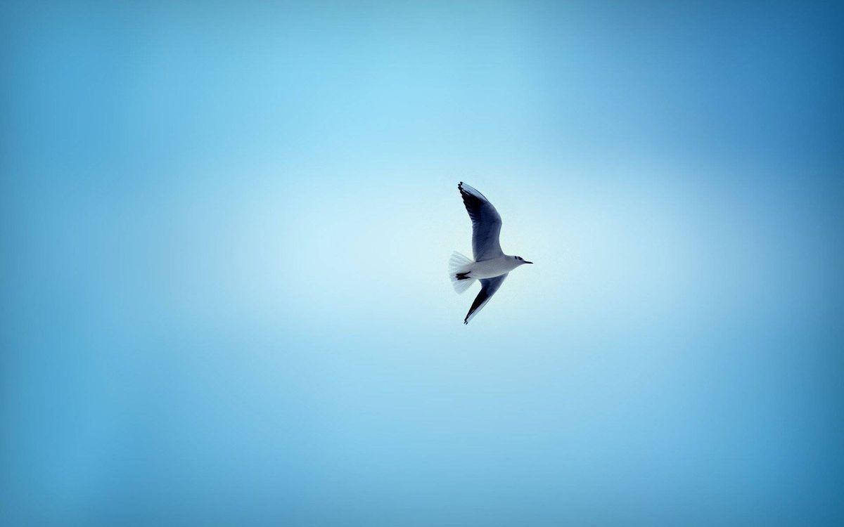 Фото бесплатно чайка, клюв, крылья, хвост, перья, полет, птицы