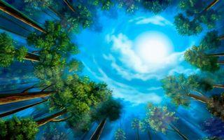 Бесплатные фото деревья,лес,сосны,солнце,небо,облака,листья