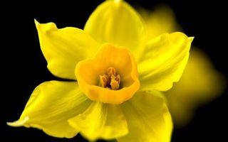 Бесплатные фото лепестки,желтые,пестики,тычинки,фон,черный,цветы