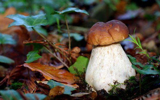 Заставки лес, грибы, листья