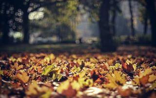 Фото бесплатно падают листья, клен, парк