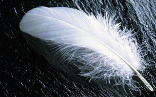 Photo free feather, white, fluff