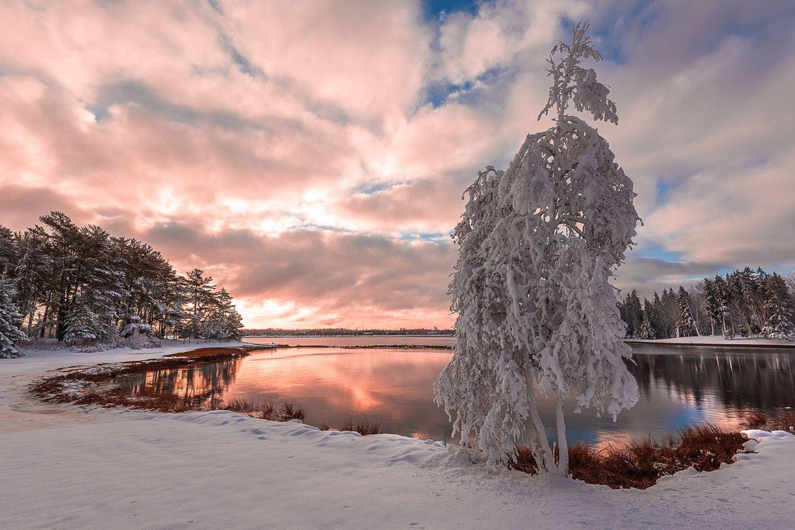Фото бесплатно Первый снег в Нью-брунсвик, Канада, закат, зима, озеро, деревья, пейзаж, пейзажи - скачать на рабочий стол