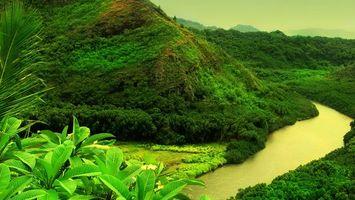 Бесплатные фото река,вода,деревья,кусты,зелень,листья,природа