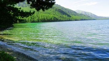 Бесплатные фото река,вода,волны,лес,трава,деревья,горы