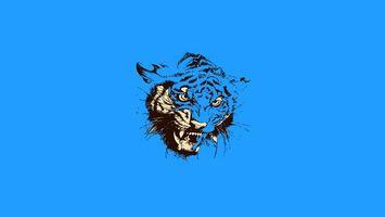 Бесплатные фото тигр,морда,оскал,клыки,глаза,фон,синий