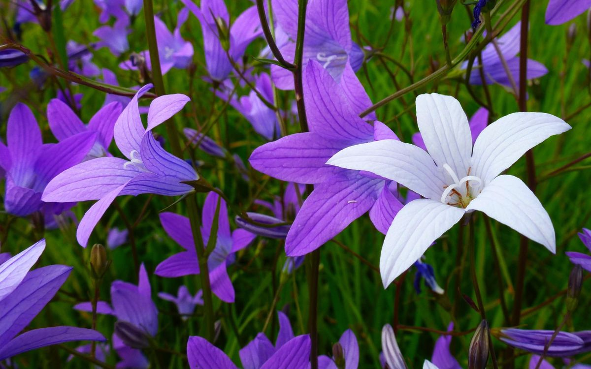 Фото бесплатно цвет, фиолетовый, белый - на рабочий стол