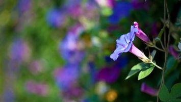 Фото бесплатно цветок, лепестки, клумба