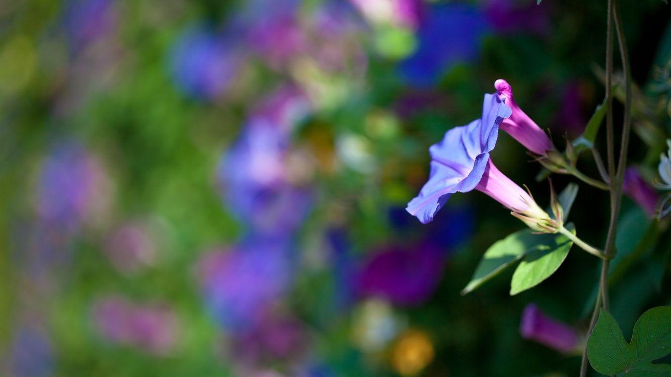 Фото бесплатно цветок, лепестки, клумба, куст, дерево, цветение, лето, тепло, листья, ветки, цветы, цветы