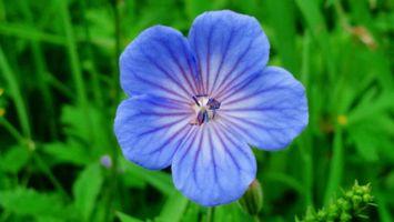 Фото бесплатно цветок, лепестки, листья, тычинка, серединка, трава, поле, луг, поляна, клумба, цветы