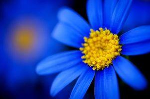 Бесплатные фото цветок,листья,лепестки,серединка,тычинка,ромашка,цветы