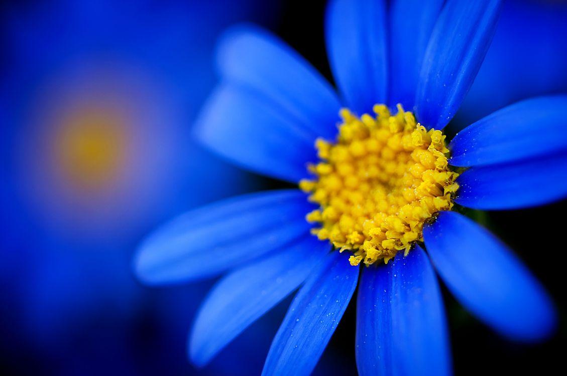 Фото бесплатно цветок, средняя, цветы - на рабочий стол