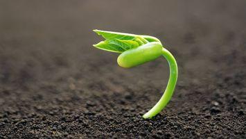 Бесплатные фото цветок,растение,зелень,зерно,семечка,листок,стебель