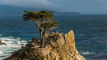Бесплатные фото вода,волны,скала,дерево,листья зеленые,природа