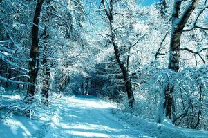 Фото бесплатно сугробы, зима, деревья