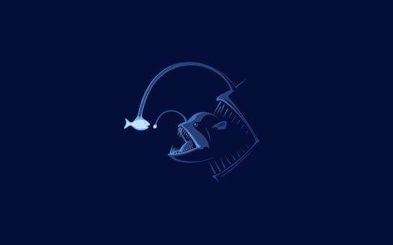 Фото бесплатно рыбы, рыба, рыбки