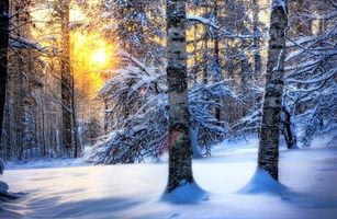 Бесплатные фото лес,закат,зима,снег,деревья,березки,природа