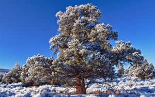 Бесплатные фото дерево,крона,снег,трава,иней,небо,природа