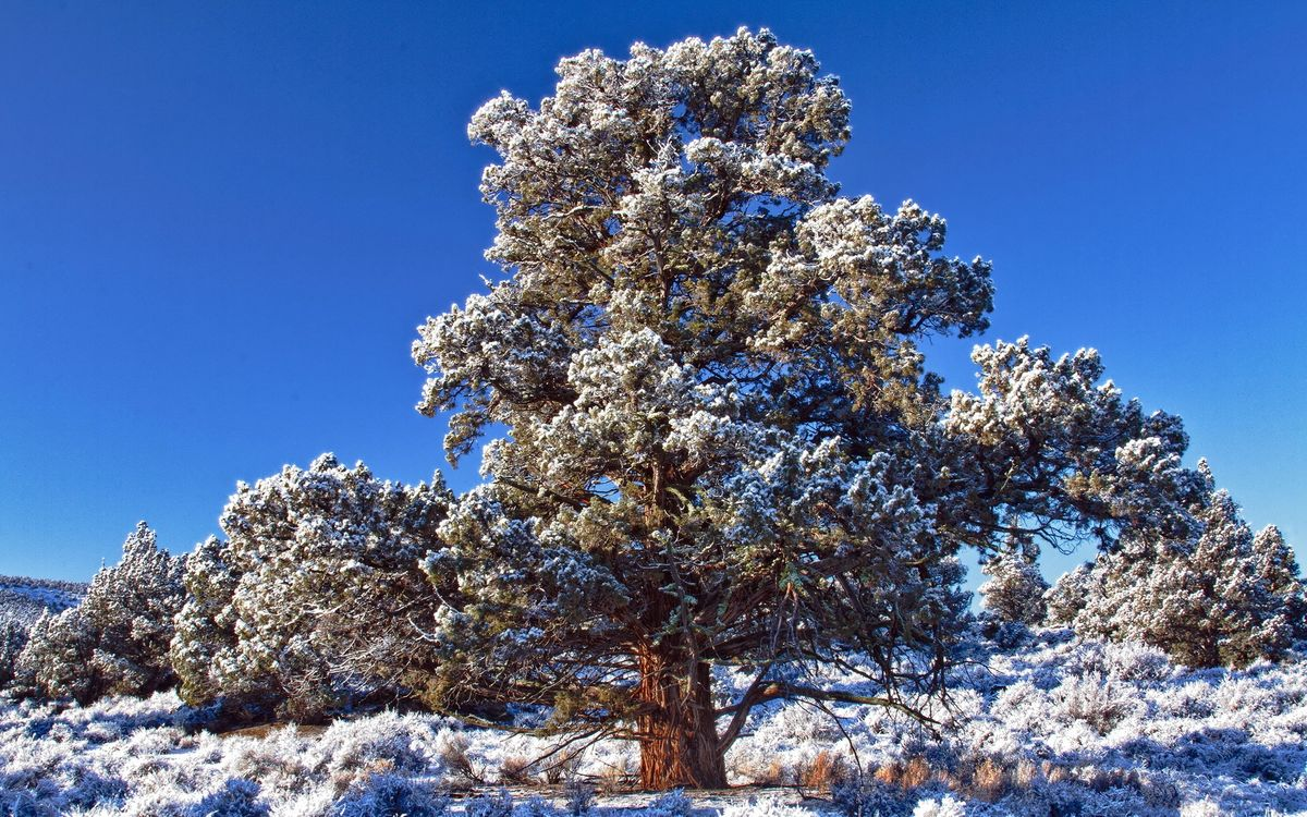 Фото бесплатно дерево, крона, снег, трава, иней, небо, природа, природа