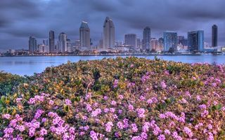 Фото бесплатно трава, дома, небоскребы