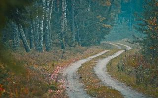 Заставки дорога, листья, деревья, лес, осень, березы, путь, пейзажи