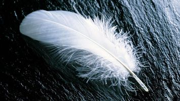 Photo free feather, white, stone