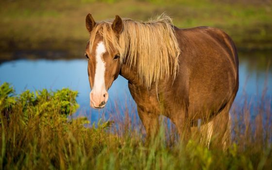 Бесплатные фото конь,морда,пятно,глаза,уши,грива,животные