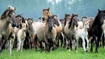 Заставки кони, жеребята, табун, бегут, трава, пастбище, животные