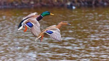 Бесплатные фото крылья,серые,голова,клюв,шея,вода,деревья