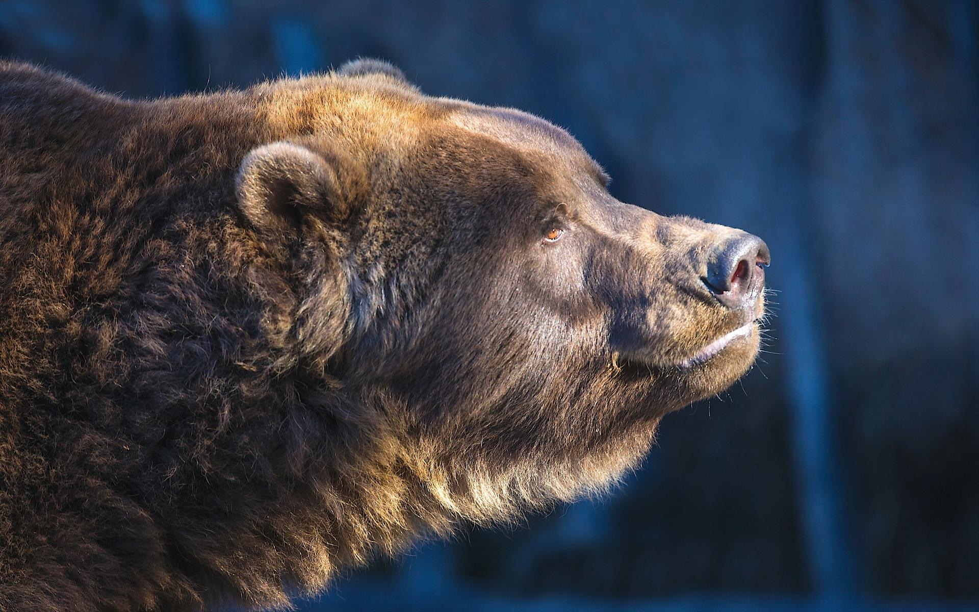 эксплуатация четкие фото медведь бывают очень