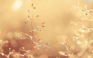 Фото бесплатно осень, веточки, дерево