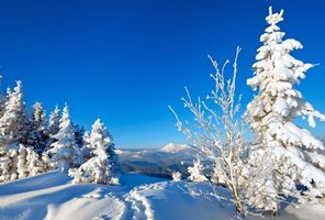 Photo free landscape, winter, snow