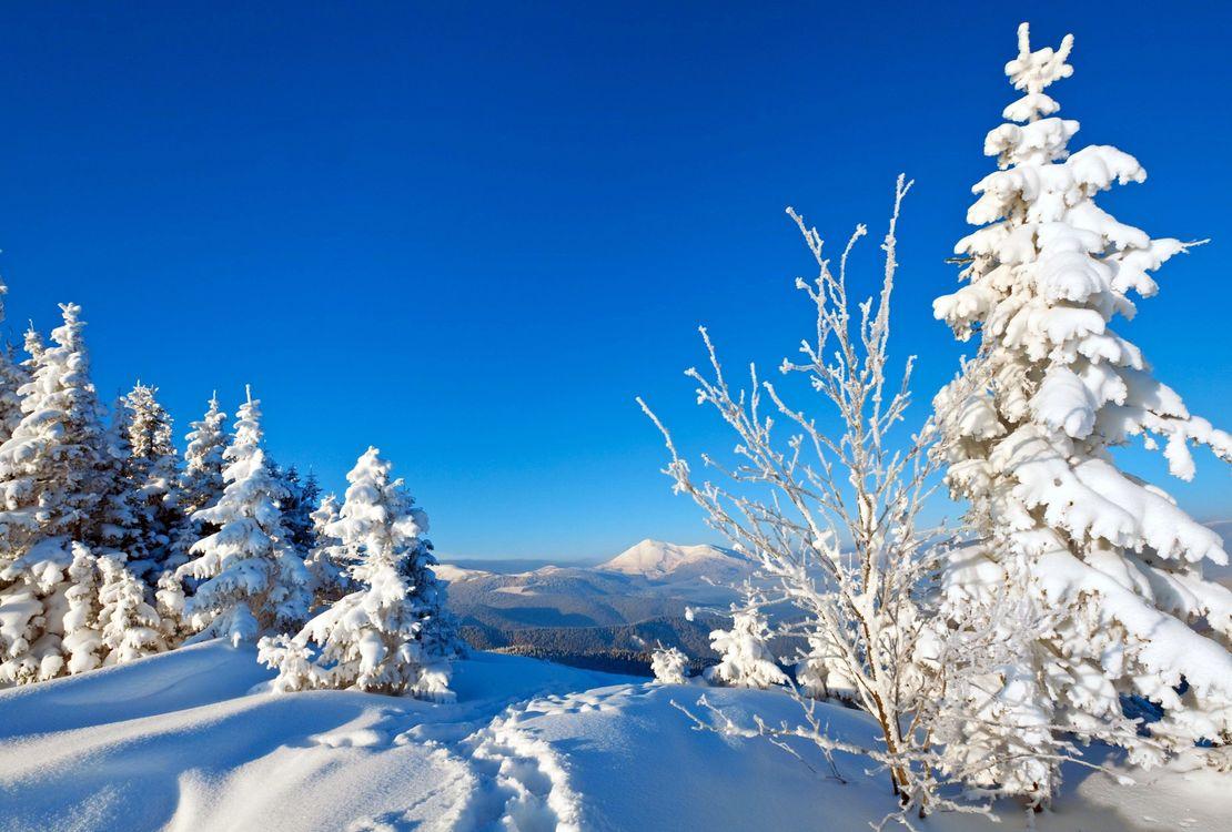 Картинки на телефон природа зима, поздравления мужчин февраля