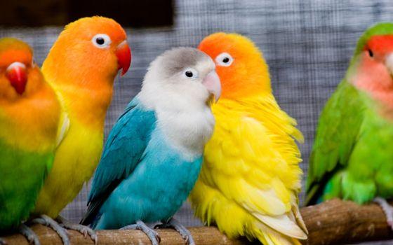 Фото бесплатно попугаи, птицы, перья