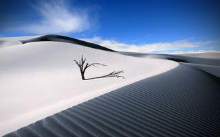 Бесплатные фото пустыня,дюны,дерево,небо,облака,ветер,голубое