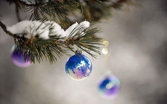 Фото бесплатно Шары на еловых ветках, снег, шар