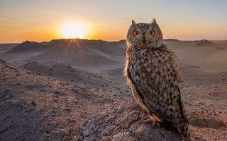 Бесплатные фото сова,глаза,перья,клюв,лапы,хвост,птицы