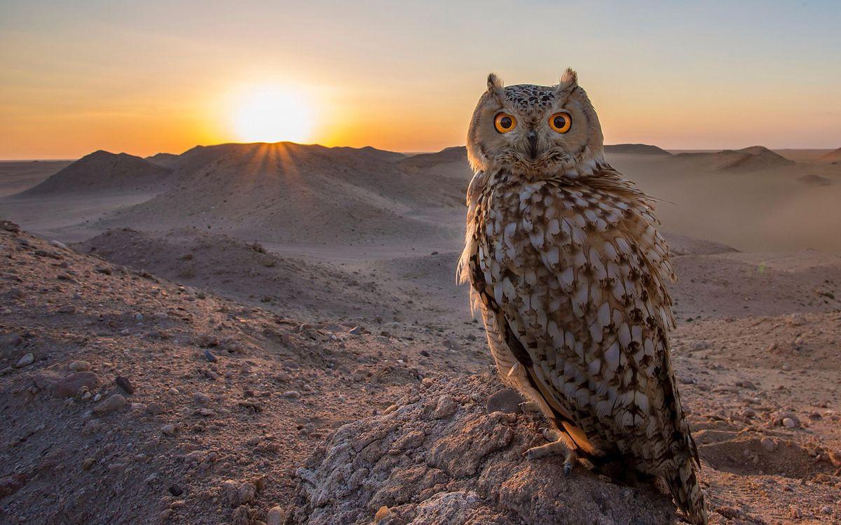 Фото бесплатно сова, глаза, перья, клюв, лапы, хвост, птицы, птицы